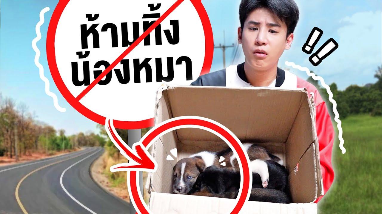 กล่องสุ่มหมาจร?! ตื่นมางงจัด คนงานเอาลูกหมามาให้เลี้ยง3ตัว (โอ้ยตายๆ ฮาๆ)
