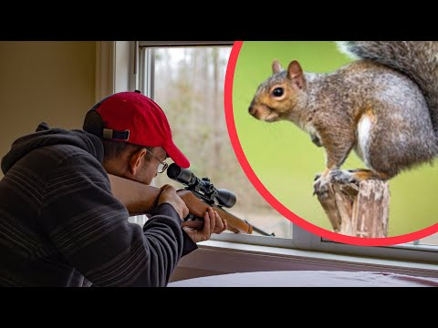 Squirrel Hunting with a 22 (CATCH CLEAN COOK)