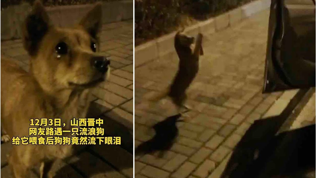 Stray dog 'cries' tears of joy after kind stranger feeds him on the street