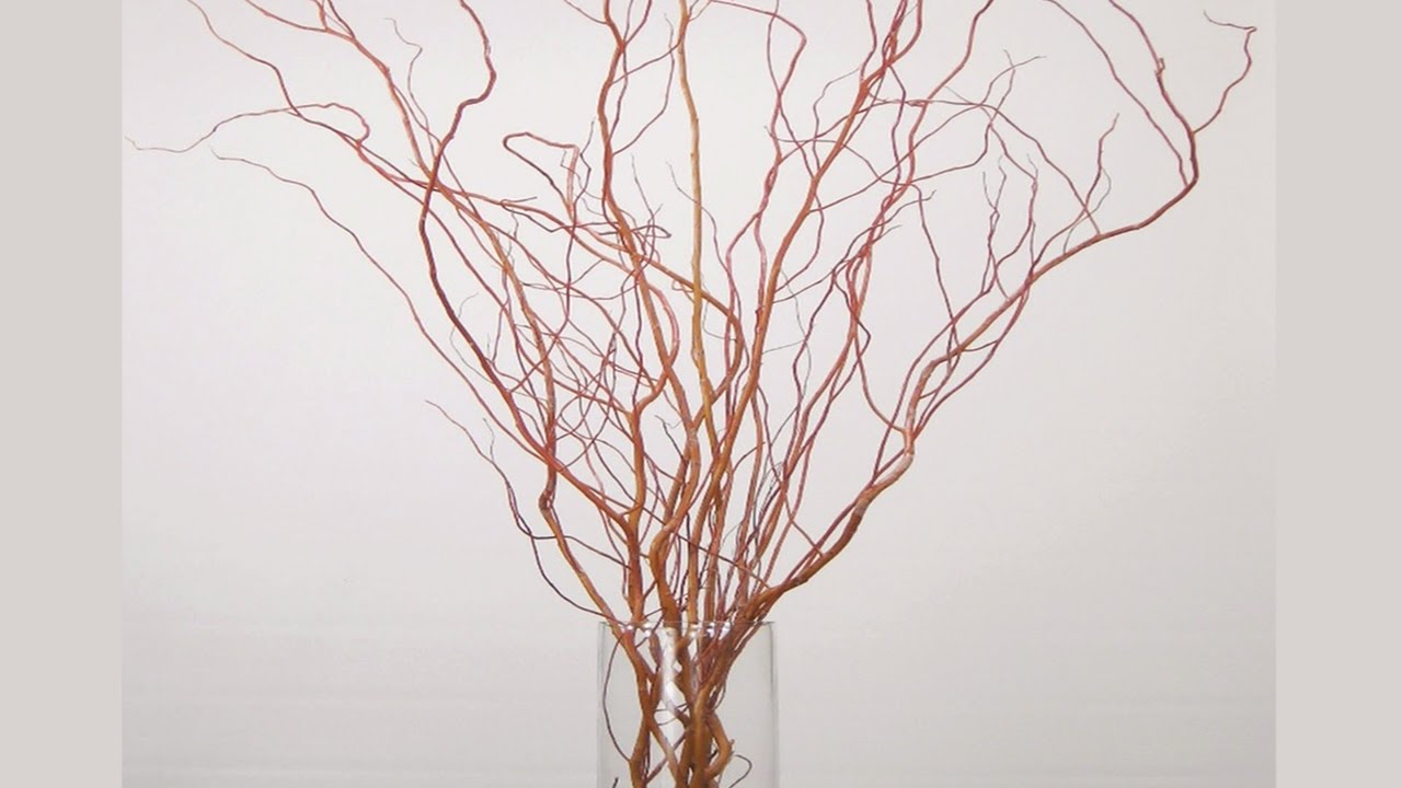 Diy How To Design Curly Willow And Pussy Willow Branches
