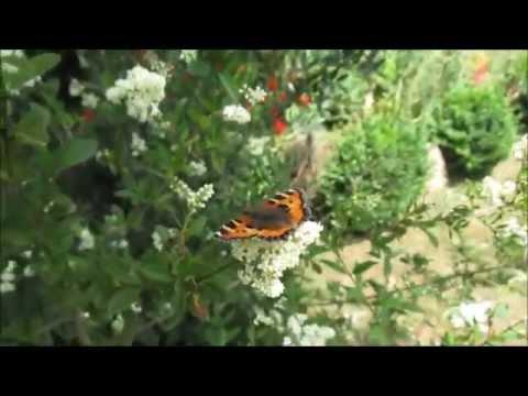 Schmetterlinge In Den Garten Locken