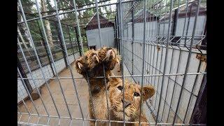 Смотрим место, куда таможенники «свозят» контрабандных животных