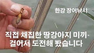 한강 장어낚시 땅강아지 작은 두더지 직접 채집해 생미끼로 내림장어 도전 출조부터 철수까지 영상 금어기니까 장어는 방생 해야죠? ウナギ, うなぎ mole cricket Breeder