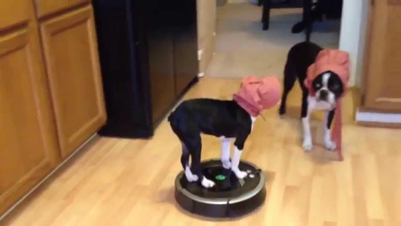 Dog Riding Roomba - Pioneer Costume - YouTube