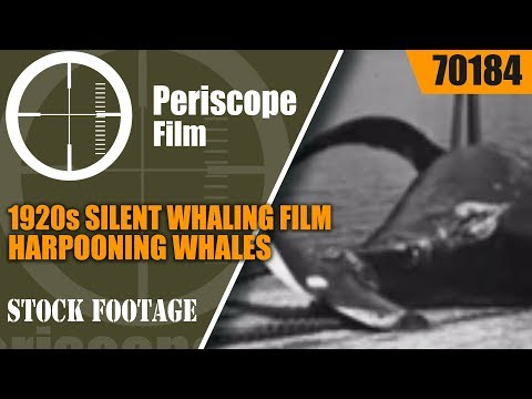 1920s SILENT WHALING FILM  HARPOONING WHALES  70184