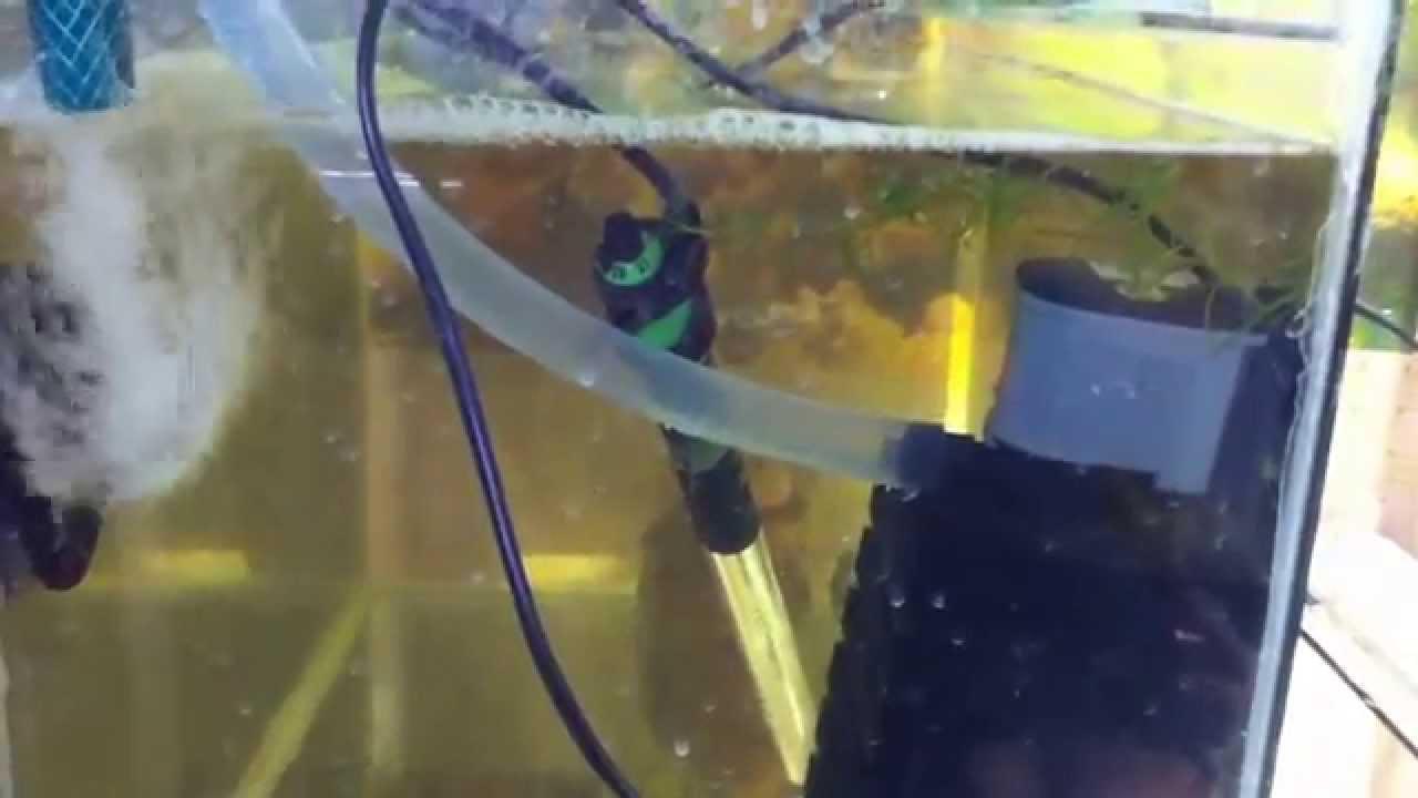 Как сделать самп для аквариума фото 706
