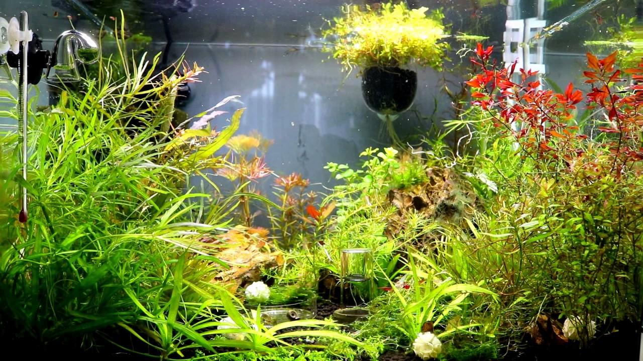 aquascaping shrimp tank 13.2 gallons - YouTube