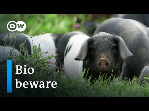 Organic food - hype or hope? | DW Documentary