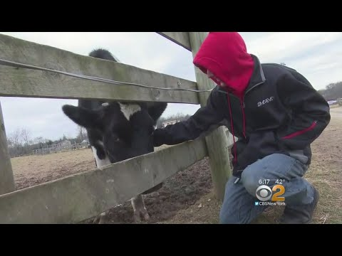 New Jersey Farm Offers Opportunity For People With Special Needs