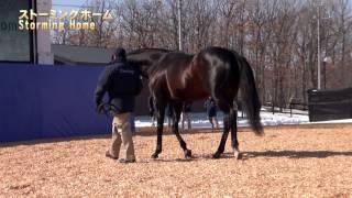 ダーレー・スタリオンパレード2014-全映像(新種牡馬ハードスパンやモンテロッソなど8頭)
