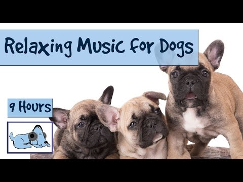 Over 9 Hours of Relaxing Music for Dogs! Compilation of Soothing Music for your Pup! 🐶 RMD10