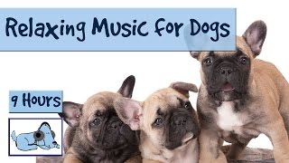 Over 9 Hours of Relaxing Music for Dogs! Try Out our Compilation of Soothing Music for your Pup!