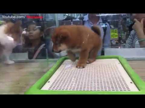 Dogs Cats Hamster Rabbit Puppies | Hong Kong China | Street Stores Pet Shops