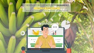 Observatorio Estadístico Bananero del Ecuador   AEBE