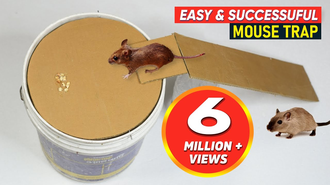 Bucket Mouse Trap Best Mouse Trap Diy Homemade Mouse Trap Youtube