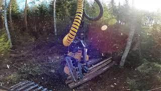 Kesäkauden 2020 ensimmäinen savotta avohakkuuta ja taimien väistelyä. Ponsse Scorpion King H7