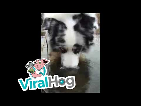 Dog Blowing Bubbles