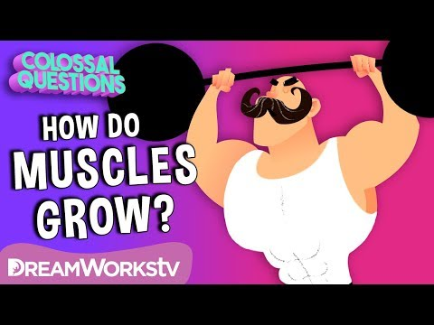 How Do 💪Muscles Grow?  COLOSSAL QUESTIONS
