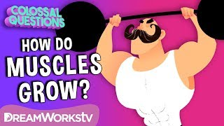 How Do 💪Muscles Grow? | COLOSSAL QUESTIONS