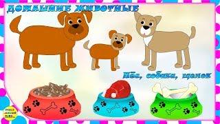 Учим животных:  пёс, собака, щенок! Развивающие мультфильмы о животных
