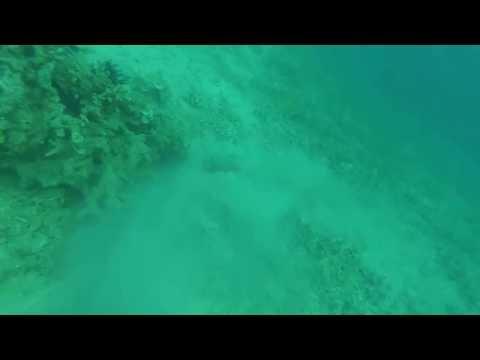 amateur freediver saw a stingray at tunda island