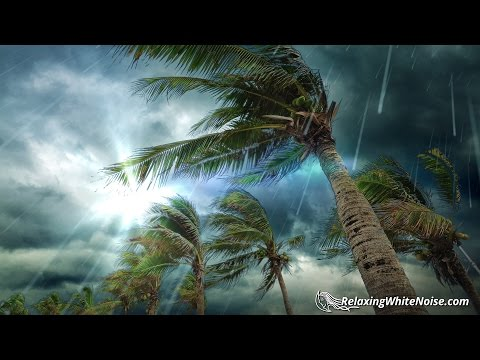 Tropical Storm Rain Sounds | Sleep, Study or Relax with Rainstorm White Noise | 10 Hours