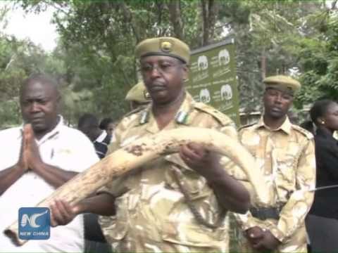 Kenya mulls tougher punishment for wildlife crimes