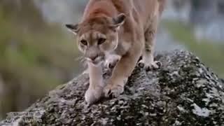 Драка животных на съеденье