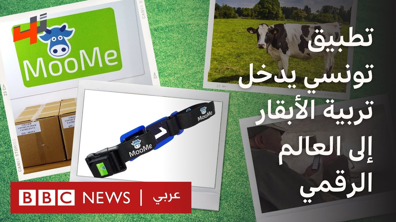 تطبيق تونسي يدخل تربية الأبقار إلى العالم الرقمي  - نشر قبل 2 ساعة