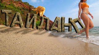 Трансы обезьяны острова в Паттайе Таиланд во всей красе
