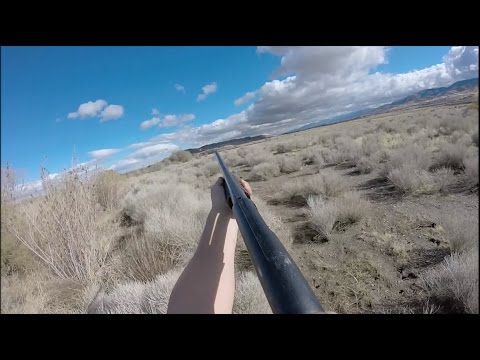 Solo Quail Hunting California