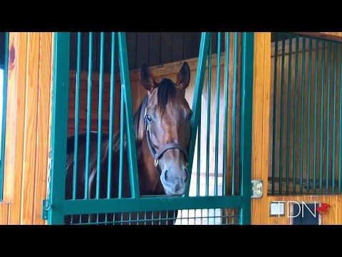 Meet Beholder's First Two Foals