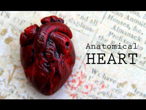 DIY Anatomical Human Heart Polymer Clay Magnet Tutorial