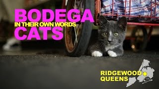 Bodega Cats In Their Own Words: Carmel Of Ridgewood, Queens
