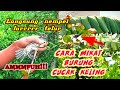 Cara Mikat Burung Cucak Keling  Mp3 - Mp4 Download