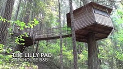 Lilly Pad Treehouse Bed and Breakfast