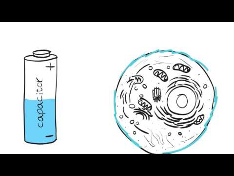 BIA Explainer Video - Bodystat