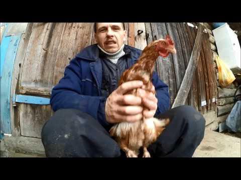 АСД фракция 2: опыт применения - Ветеринария