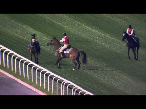 DWCC Meydan Racecourse 28-1-16, Race 2 Shiba At The Meydan Hotel