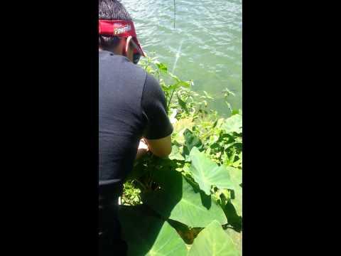 Pesca de lobina en adjuntas Puerto Rico
