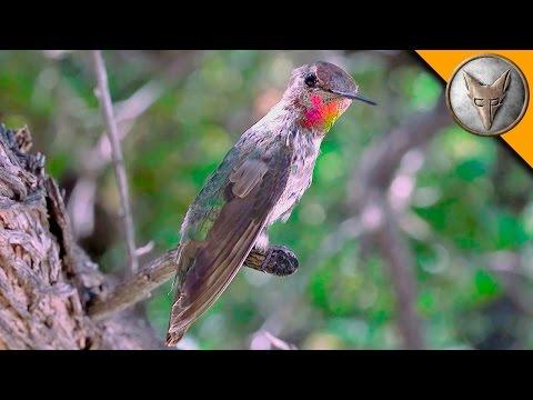 Amazing Hummingbird Experience!