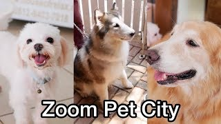 Three Dogs Having Fun Swimming at Zoom Pet City Jakarta (with Gopro Hero 5 and Panasonic Lumix G85)