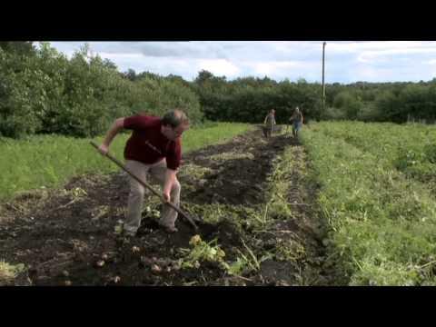 EU wants more organic products