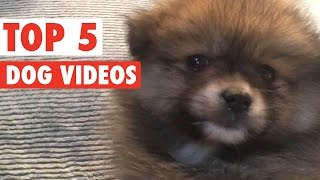 Funny Dogs of the Week May 2016