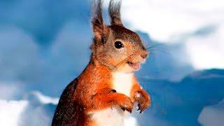 Смешные белки - Funny squirrel - Приколы белочки