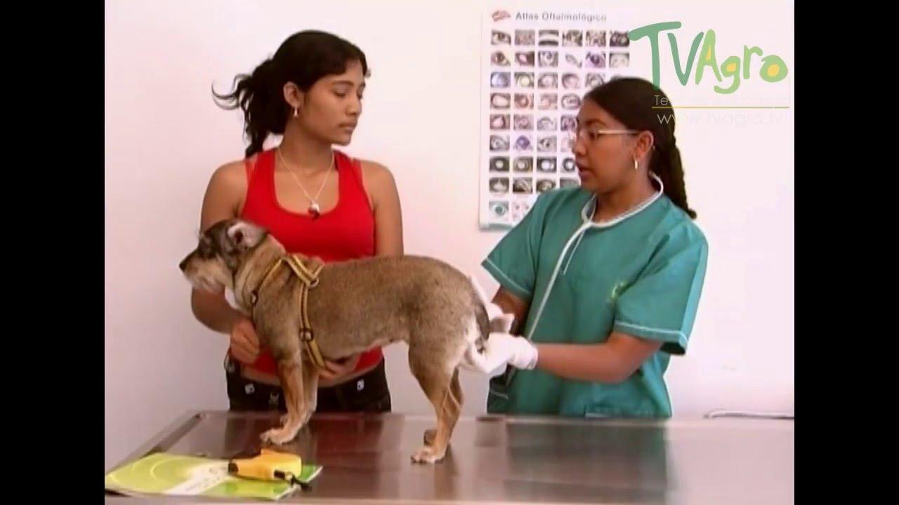 preparación antes de próstata mascota