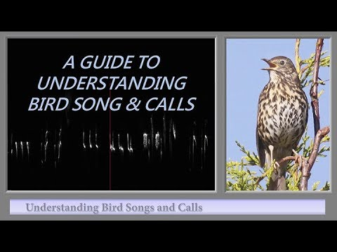 A GUIDE TO UNDERSTANDING BIRD SONG AND CALLS