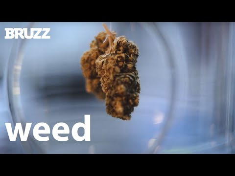 Why is Brussels full of weed shops? #2021