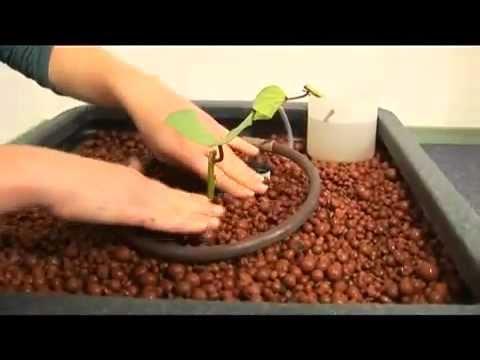видео: aquafarm, видеоинструкция по сборке гидропонной системы