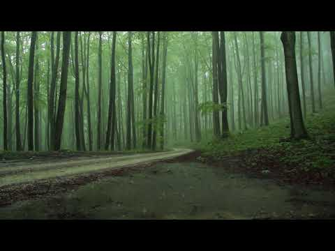 Rain Sounds 8 Hours / The Sound of Rain Falling in a Foggy Forest / Relaxing